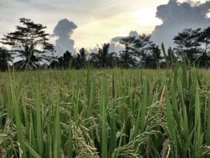 Bali's Lessons in Endurance